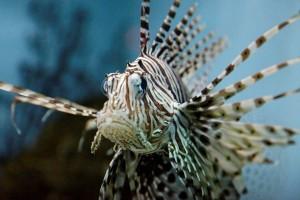 Aquarium-1